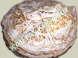 горячие закуски - рецепты c фото | блинчики с ветчиной, грибами и сыром
